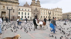 Many pigeons on Bolivar Simon Square in Bogota, Colombia. Stock Footage