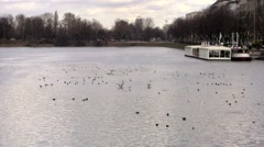 Greater Scaup Ducks at Jungfernsteg, Hamburg 1 Stock Footage