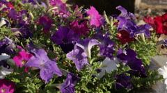 Casper WY - Sculpture and Flowers 2 Stock Footage