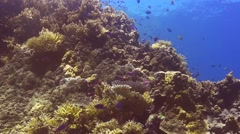 Colourful coral reef in papua new guinea Stock Footage
