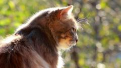 Sitting Cat In Tree Background Looks Around 1 Stock Footage
