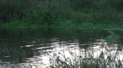 Dutch landscape river sunset canoeing girls Stock Footage
