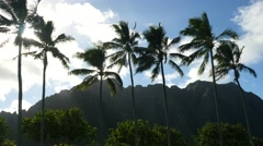Kualoa beach park, oahu, hawaii.. Stock Footage