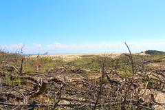 National Park Kurskaya Spit - stock photo