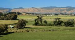 Stock Photo of new zealand farmland