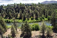 Conifer forest along the deschutes river Stock Photos