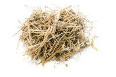 Dried herbs,artemisia annua l. on white background Stock Photos