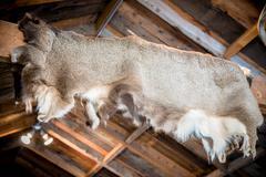 Deer skin - coat in the hunters cabin. Stock Photos