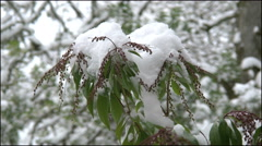Oregon snow piled on a plant 4k Stock Footage