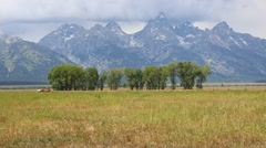 Grand Teton and Horses Stock Footage