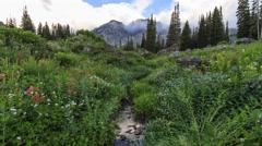 Mountain Stream Time Lapse Stock Footage