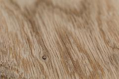 macro photo of structure of oak wood - stock photo