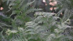 Bracken grasses and leaves Nature Background Stock Footage