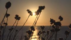 Sun View over Sea, Sunset Landscape on Coastline, Arid, Wild Flowers, Seashore Stock Footage