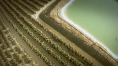 Stock Video Footage of Aerial zoom out view of an orange trees field. Seville, Spain.