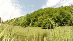 High green grass in the foreground, her mountain pond, forest and dragonflies Stock Footage