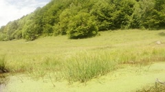 Panorama of mountain bright green swamp Stock Footage