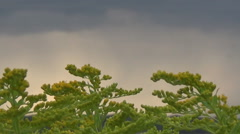 Goldenrod, sky Stock Footage