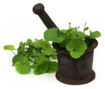 Medicinal thankuni leaves with mortar and pestle Stock Photos