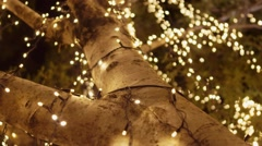 Fairy lights on a tree in Noosa Queensland, Australia Stock Footage