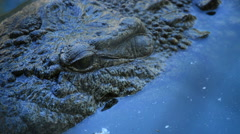 Crocodile in the river in close up Stock Footage