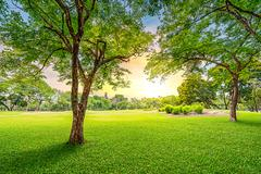 tree in golf course - stock photo