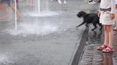 Funny dog barking, fountain, water, happy kids playing, people legs, heatwave - stock footage