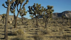 Joshua Tree Aerial.1 Stock Footage