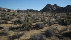 Joshua Tree Aerial.2 Stock Footage