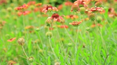 Flower and bee garden in the morning. Stock Footage