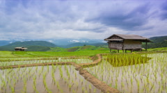 Time lapse terrace rice farm and nimbus clouds floating of thailand Stock Footage