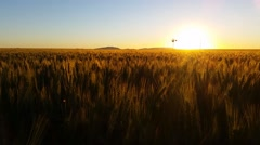 Nature Scenic Wheat field farming sunset landscape with wind mill Stock Footage