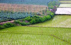 green crop field - stock photo