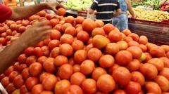 Selecting a Fresh Tomato Stock Footage