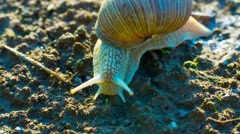Little snail crawling on the ground Stock Footage