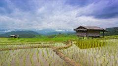 Time lapse rice farm and nimbus clouds floating of thailand (pan shot) Stock Footage