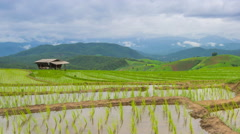 Time lapse rice farm and nimbus clouds floating of thailand (zoom out) Stock Footage