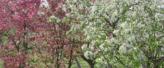 Colorful flowering trees 4K Stock Footage