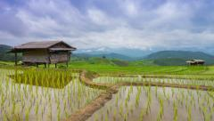 Time lapse rice farm and nimbus clouds floating of thailand (zoom in) Stock Footage