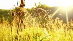 Prairie grass, spider web and sun Stock Footage