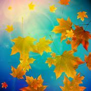 Beautiful autumn Leaves. Stock Illustration