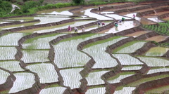 Farmers working plant rice in terrace farm land and raining of thailand Stock Footage