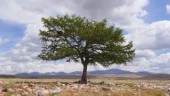 Stock Video footage time lapse shaman tree in the desert Stock Footage