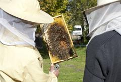 Two beekeepers inspect the bees Stock Photos