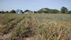 Pineapple form land in Bulgaria Stock Footage
