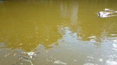 Ducks in the lagoon - stock footage