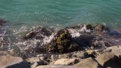 Mussels on Rocks California - stock footage