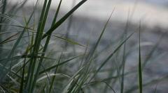 Vegetation on the sandy beach Stock Footage