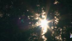 Forest Trees Sunrise Time Lapse - stock footage