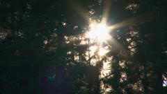 Forest Trees Sunset Time Lapse Stock Footage